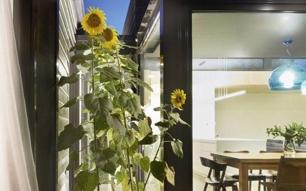 trồng vườn hoa trong nhà cấp 4